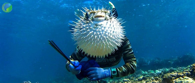 на какой глубине какая рыба клюет