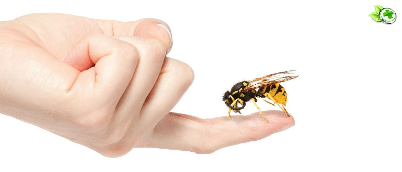 Лечение пчёлами