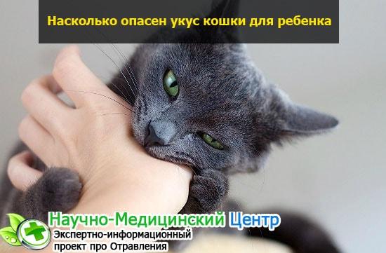 Какие антибиотики помогут при укусе кошки?