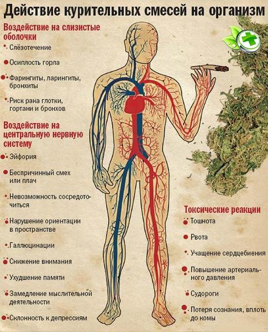 Влияние марихуана на организм выращивание марихуаны видео урок