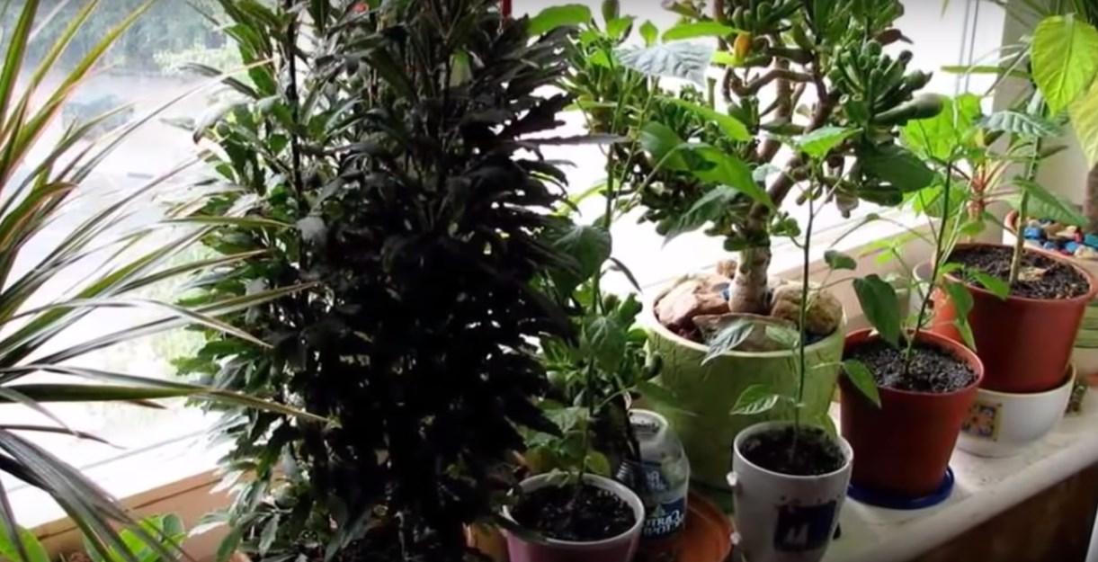 Домашние лечебные травы