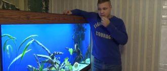 Установка аквариума. Рыбки в аквариуме
